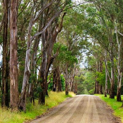 Colquhoun State Forest image